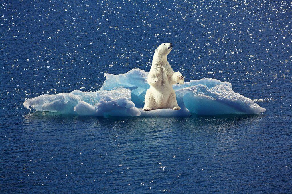 Oso polar sobre un pedazo de hielo- Pixabay