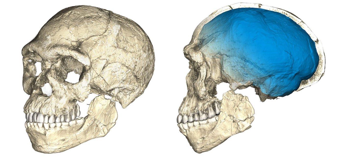 Reconstrucciones del cráneo de los primeros fósiles de Homo sapiens descubiertos en el yacimiento de Jebel Irhoud (Marruecos)- Philipp Gunz, MPI EVA Leipzig