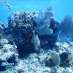 Mahaual, el arrecife más pristino del Caribe, colapsó al perder 43 hectáreas