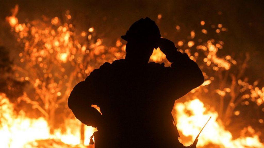 Los incendios forestales que renuevan los bosques han disminuido, por la actividad humana
