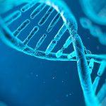 Los errores introducidos por el 'corrector del ADN' son una importante causa de cáncer