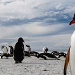 """Dos Mexicanos fotografían el """"Territorio Indómito"""" de las Islas Malvinas, invitados por la Embajada Británica (Échale un ojo a la galería)"""
