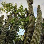 El Santuario de los Cactus, 20 años de servicios