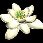 Así fue la primera flor