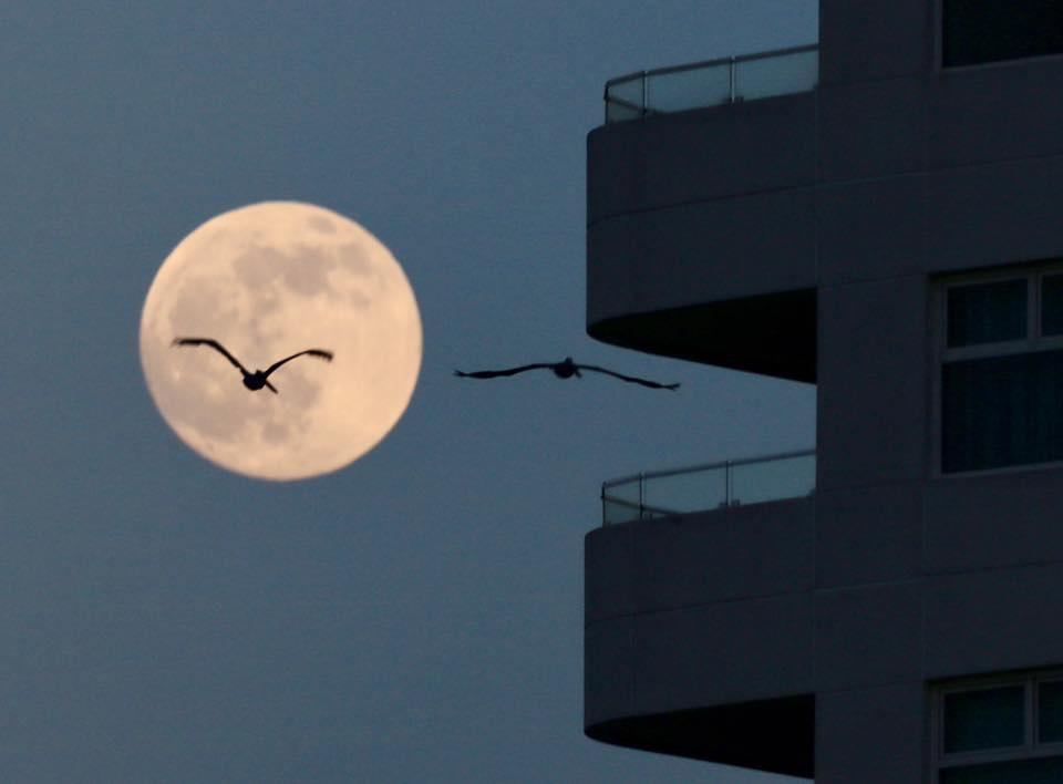 Luna con gaviotas- Hugo Garrido