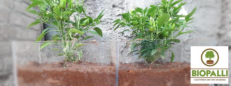 Biopalli, un fertilizante orgánico hecho con nopal