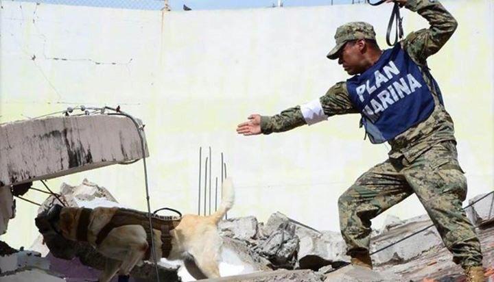 Perros rescatistas: Los héroes más reconocidos en la tragedia del sismo del 19 de septiembre