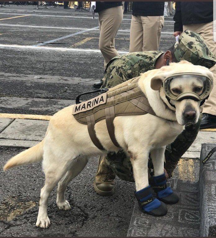 Frida, la perra de rescate estrella de la Marina