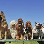 A los perros, a grandes esfuerzos, grandes recompensas. Eso los hace felices