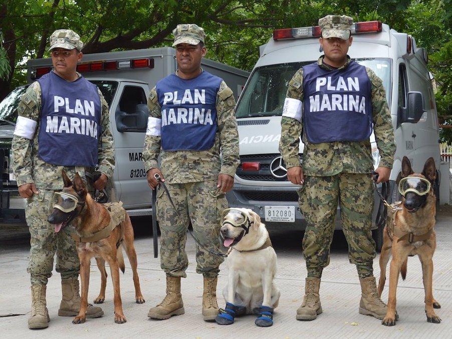 Perros de rescate Evil, Frida y Eco