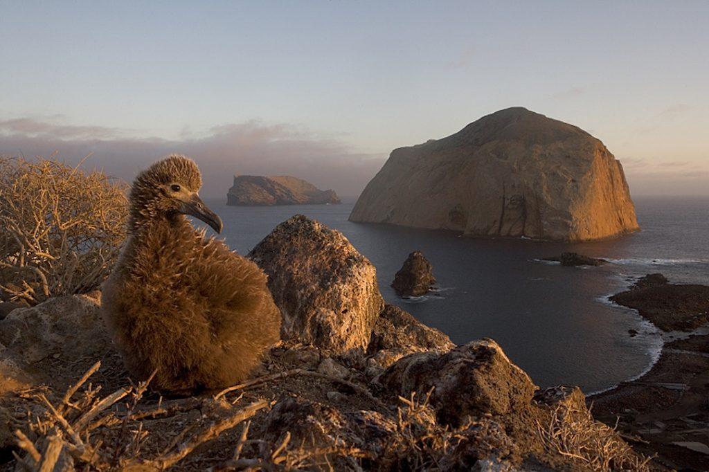 Islas de México, una serie para la conservación de la biodiversidad mexicana