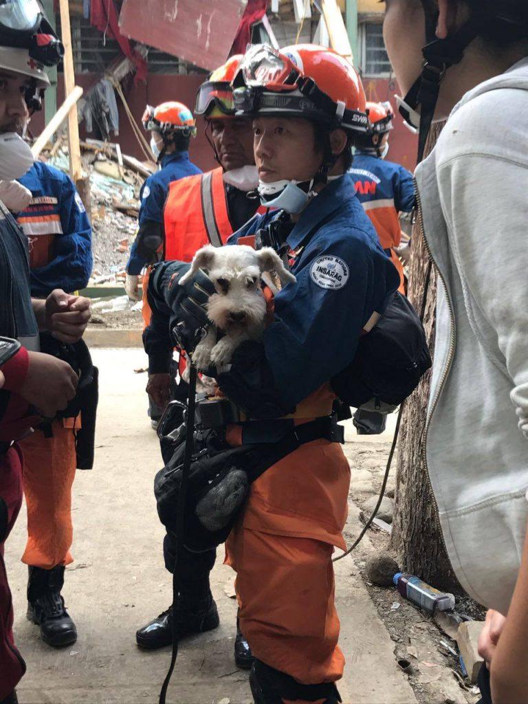 Rescate de un perro después del sismo del 19 de septiembre de 2017, por las brigadas de Japón- Embajada de Japón en México