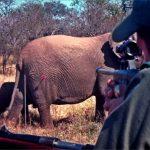 Anticoncepción de la fauna salvaje, una alternativa a la caza de control