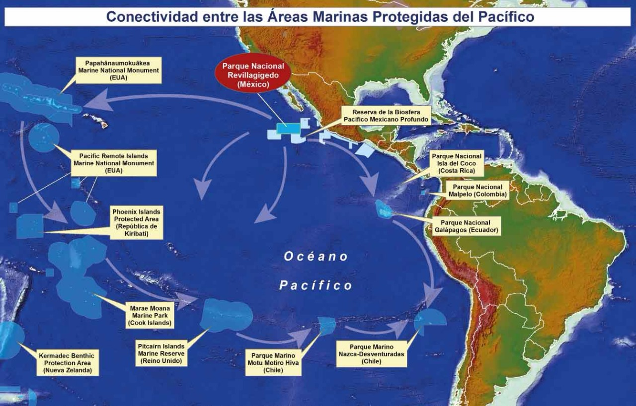 """Revillagigedo será el Parque Nacional Marino de """"no pesca"""" más grande de Norteamérica"""