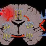 La computación confirma que la esclerosis múltiple  siempre va a empeorar