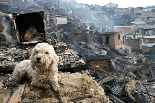 Perro después del incendio de Portugal