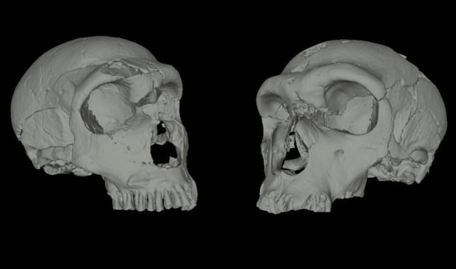 Reconstrucción en 3D de cráneos de neandertales- A. Balzeau (Musée de l'Homme, Paris, France
