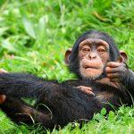 El cerebro, nuestra principal diferencia con otros primates