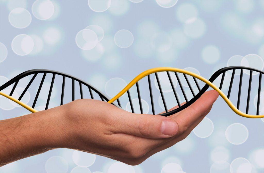 La modificación genética- CC