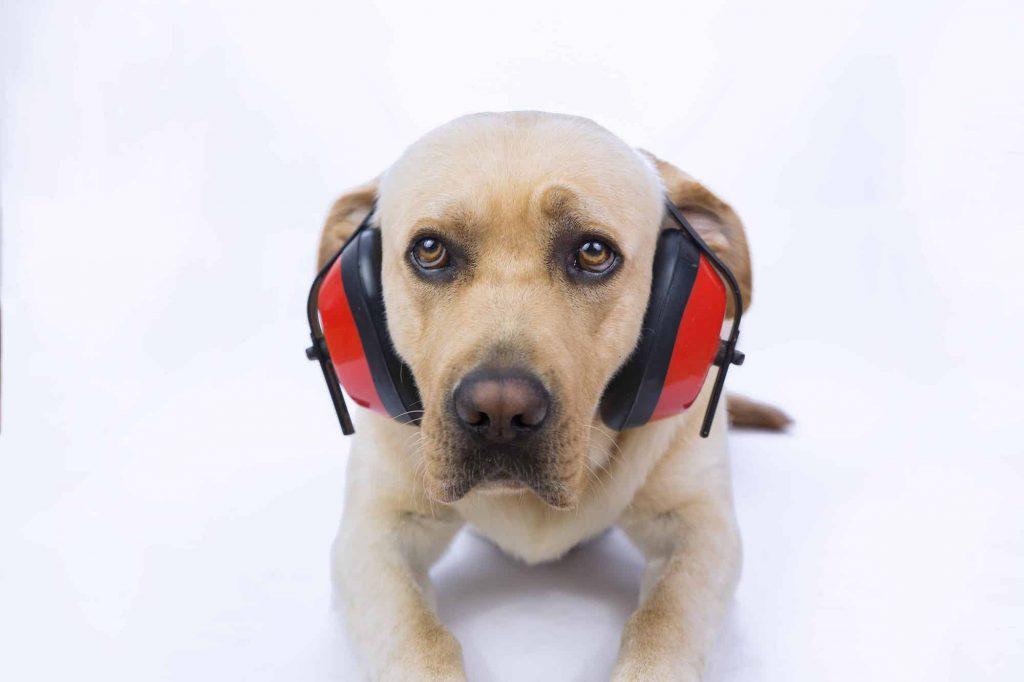 Perro con audífonos- AdobeStock