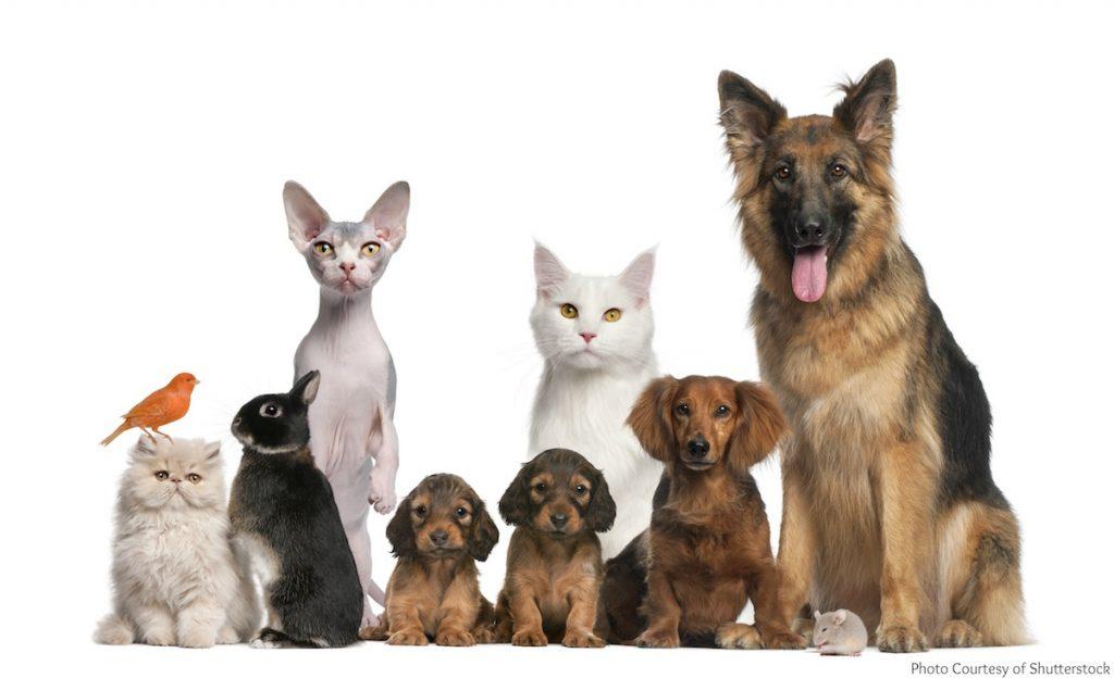 Animales de compañía, mascotas- Shutterstock
