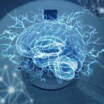 Son dos zonas cerebrales básicas las implicadas en la lectura