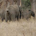 Locas investigaciones científicas: caca de elefante, gatos líquidos, provocarle erecciones a las tortugas