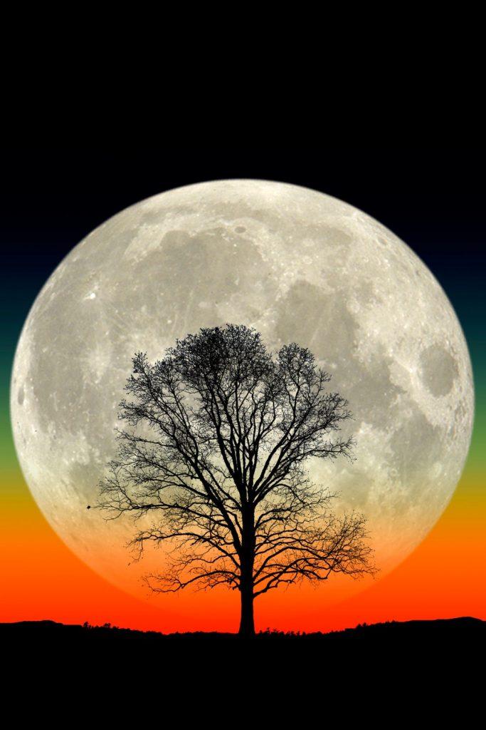 Gran Luna, Gran árbol- Larry Landolfi