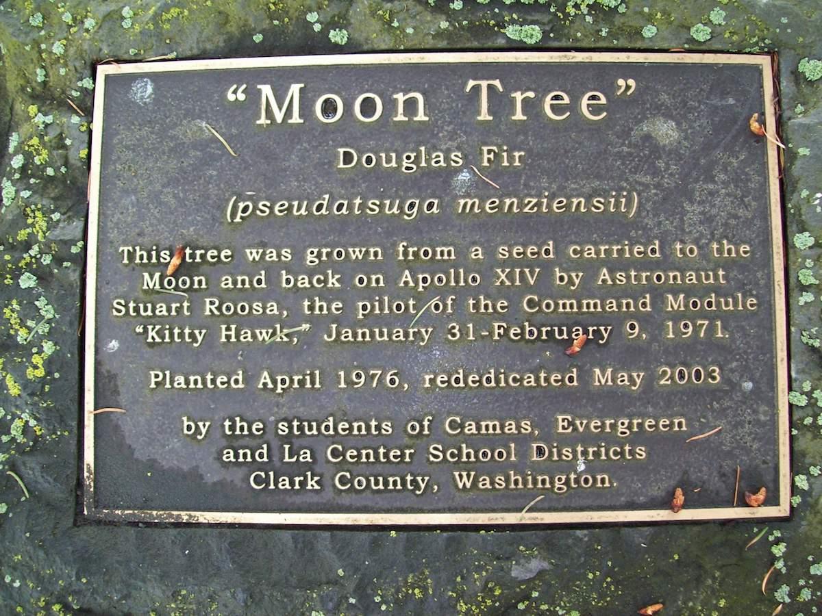 Placa de un árbol de la Luna en Washington