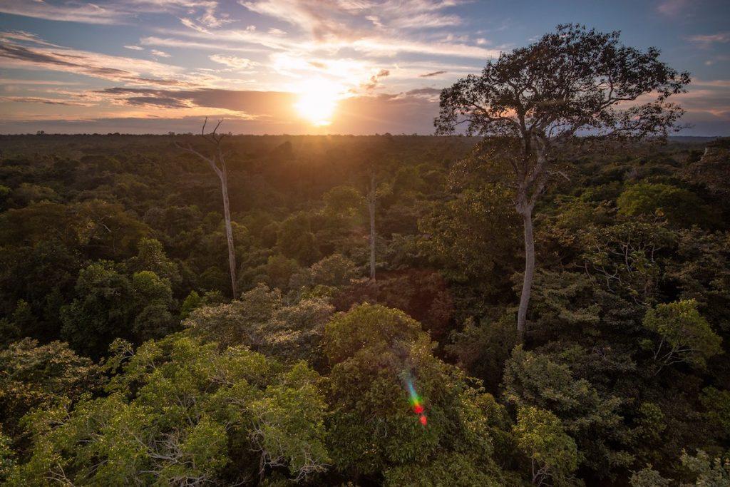 Amanecer en el Amazonas- Oriol Massana y Adrià López Baucells