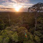 Una carretera que puede propiciar la deforestación de la Amazonia boliviana