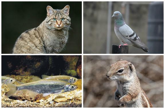 Atlas de especies invasoras que amenazan la biodiversidad