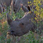 Elefantes, gorilas y antílopes son asesinados en las guerras de África</br>Amenazan al 70% de sus áreas protegidas