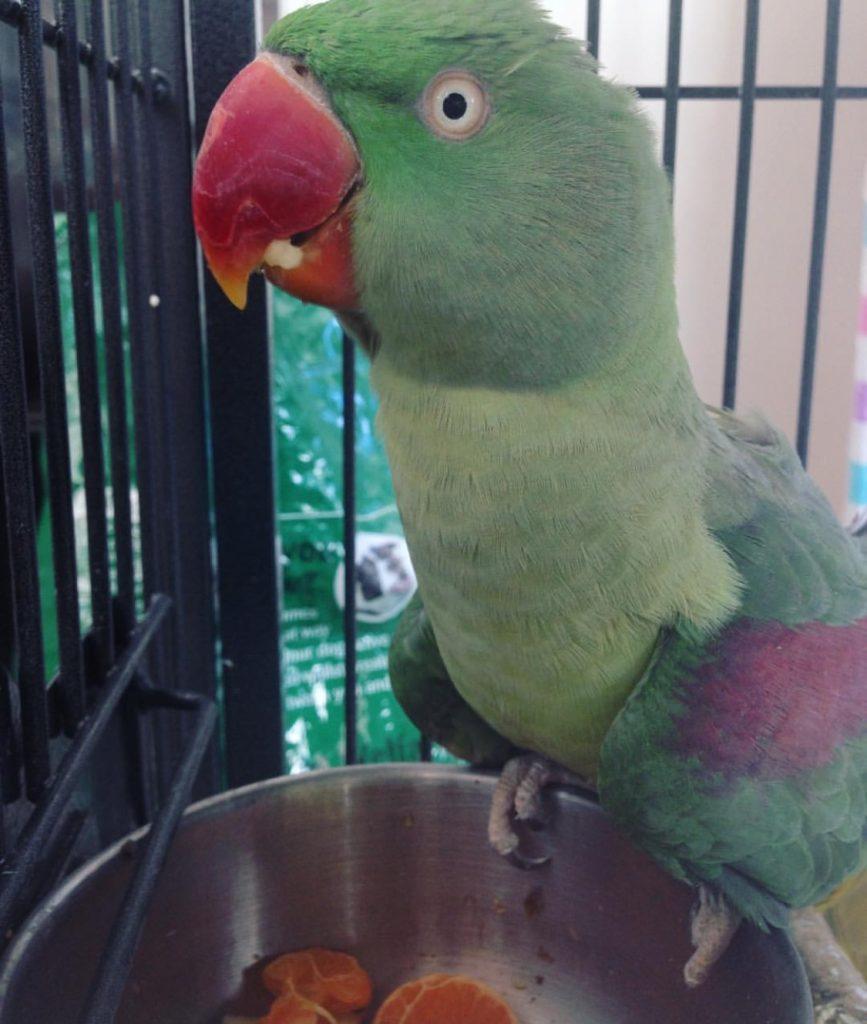 Un comerciante compra un pájaro por 7 dólares, lo vende por 8, lo vuelve a comprar por 9 y lo vende por 10. ¿Cuál es su beneficio?</br>Acertijo deRaymond M. Smullyan