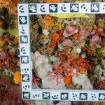 Las especies marinas que viven a más profundidad, viven más
