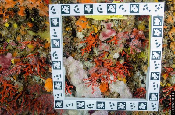 A mayor profundidad, más longevas son las especies marinas que viven adheridas al sustrato / Cristina Linares (UB-IRBio)