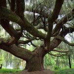 Crean un árbol genealógico que relaciona 86 perfiles de internet