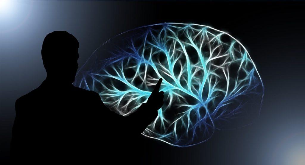 Cerebro- Pixabay