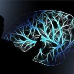 En los adultos ya no hay nuevas neuronas; el hipocampo deja de generarlas