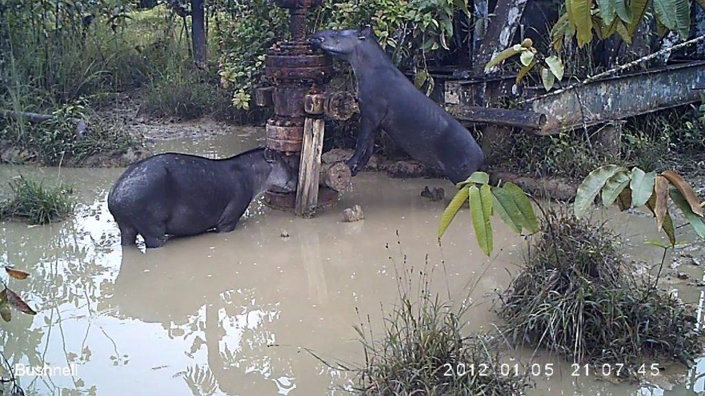 Indígenas del Amazonas comen animales contaminados