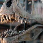 Los dinosaurios tenían gustos selectivos para comer. Elegían sus presas en función de la resistencia de sus dientes