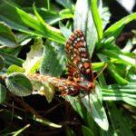 La trampa mortal que los humanos dejan a las mariposas cuando se marchan