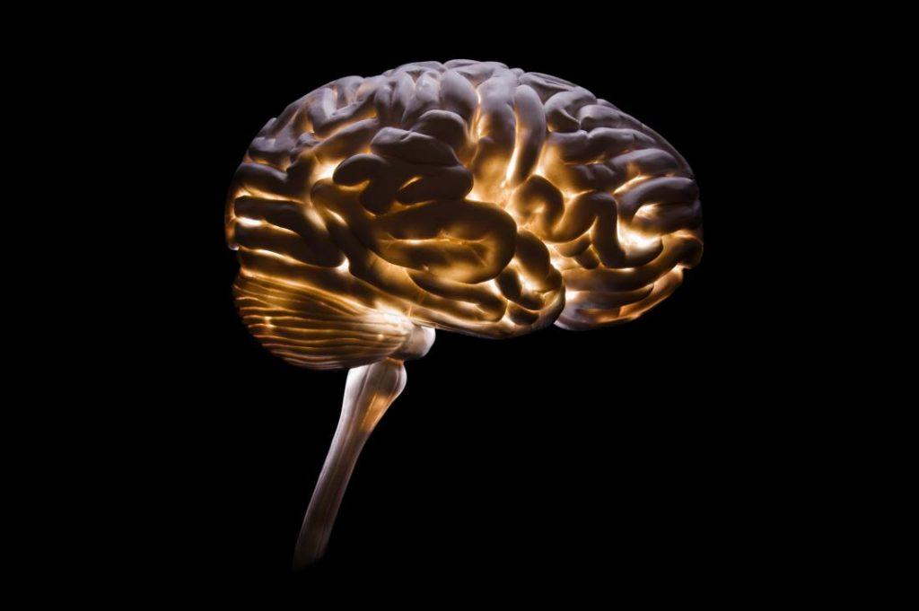 ¿La humanidad está perdiendo inteligencia?