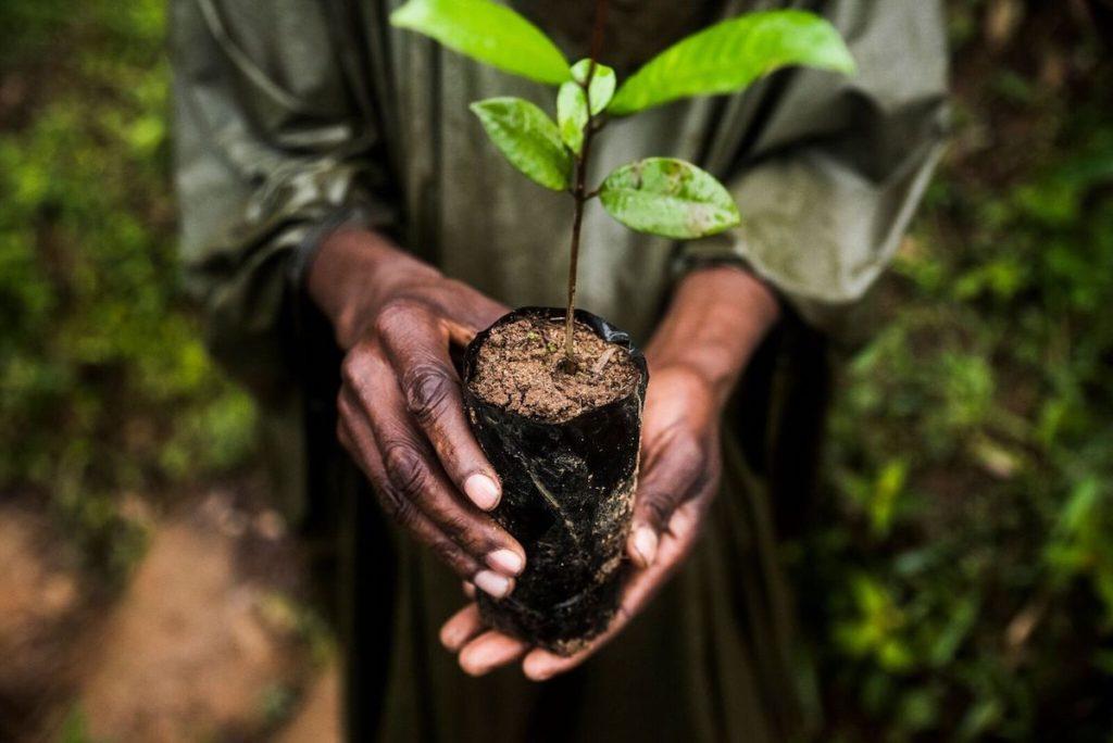 Casi el 30% de la superficie terrestre, está gestionada por grupos indígenas
