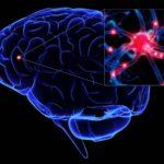 """""""La plasticidad cerebral nos permite cambiar y aprender hasta el final"""""""