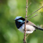 """Las """"alarmas"""" que emiten las aves, las reconocen todos los pájaros"""