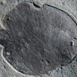 Dickinsonia, el primer animal conocido que pobló la Tierra