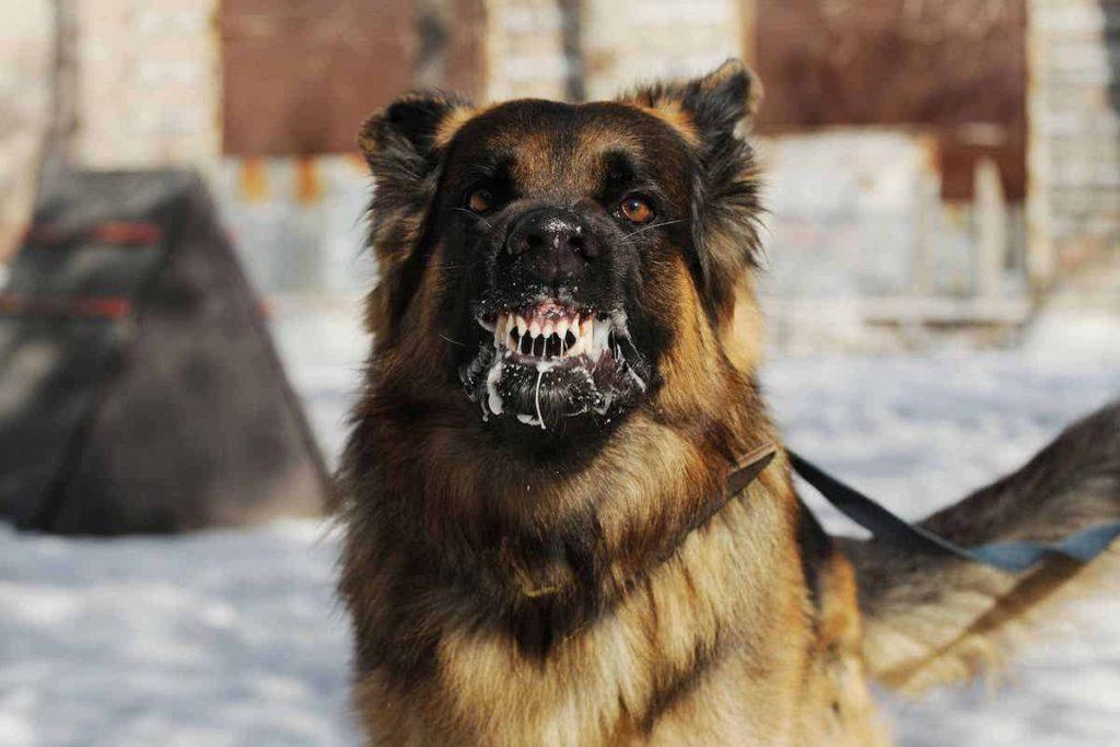 Perro con rabia