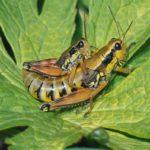 Hasta la falta de insectos hace que los ecosistemas colapsen