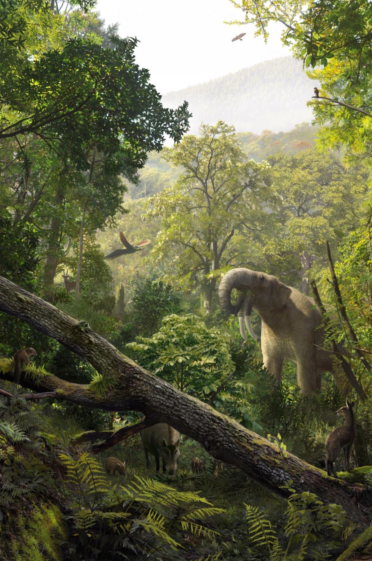Representación del medio ambiente y algunas de las especies que habitaban el área de Els Hostalets de Pierola hace unos 12 millones de años- Oscar Sanisidro, Institut Català de Paleontologia Miquel Crusafont (ICP)